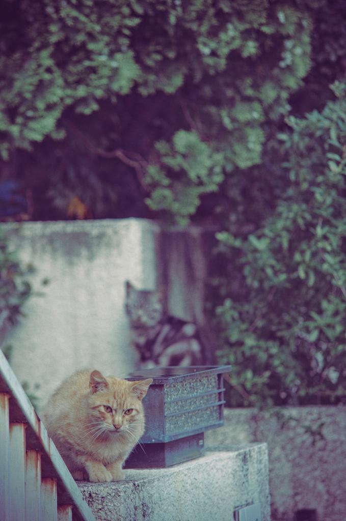 吾輩は猫である、ニャー # 1146
