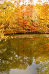 錦繍の秋 ⑭