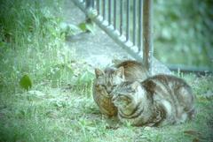 吾輩は猫である、ニャー # 953