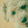 my pretty dog Ⅱ # 346