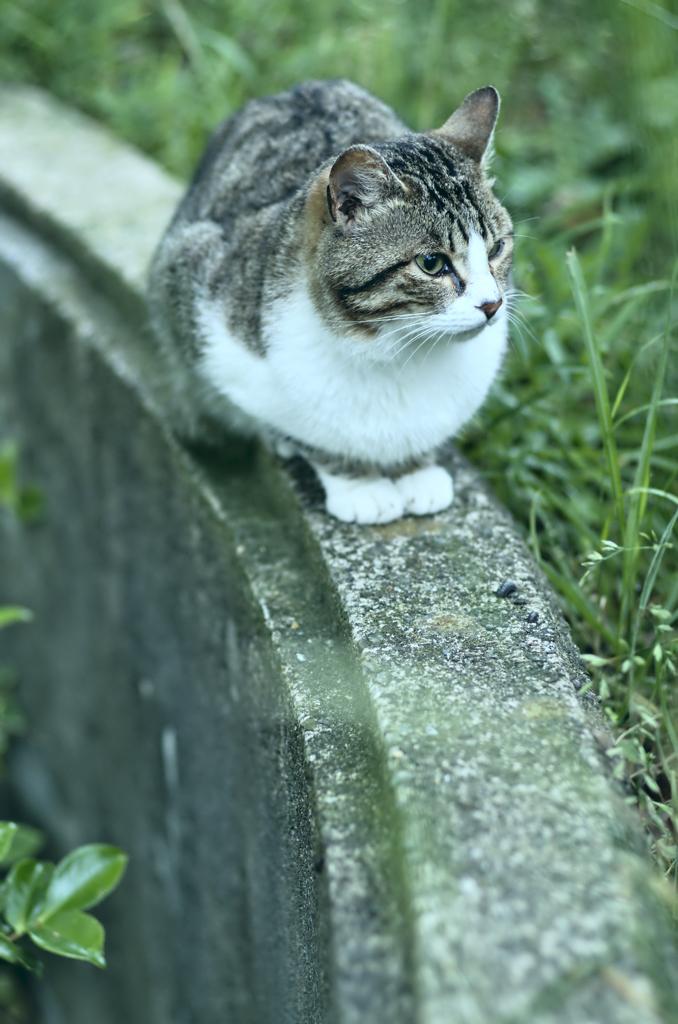 吾輩は猫である、ニャー # 258