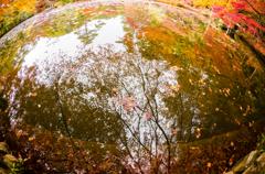 錦繍の秋 ⑯