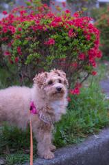 my pretty dog Ⅱ # 269