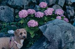 my pretty dog Ⅱ # 338