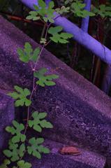 leaf #28