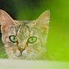 吾輩は猫である、ニャー # 375