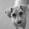 my pretty dog Ⅱ # 301