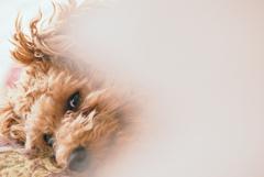 my pretty dog Ⅱ # 244