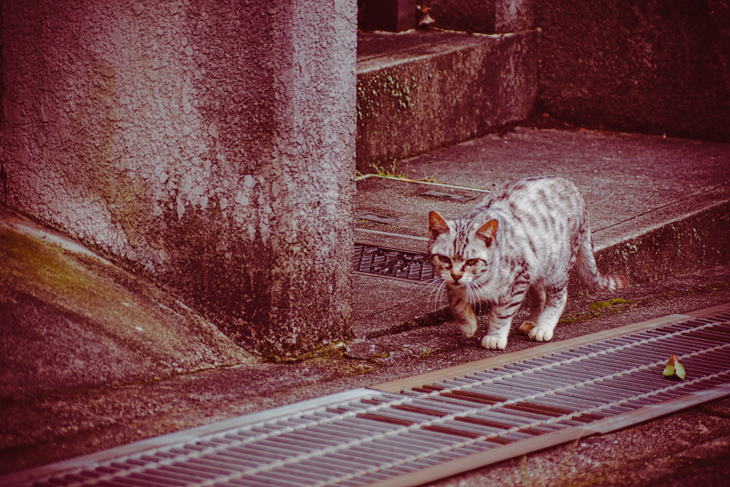 吾輩は猫である、ニャー # 1079