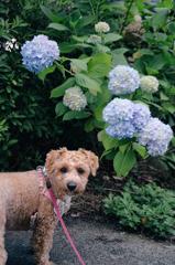 my pretty dog Ⅱ # 333