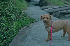my pretty dog Ⅱ # 343