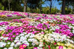 お花に囲まれて ①