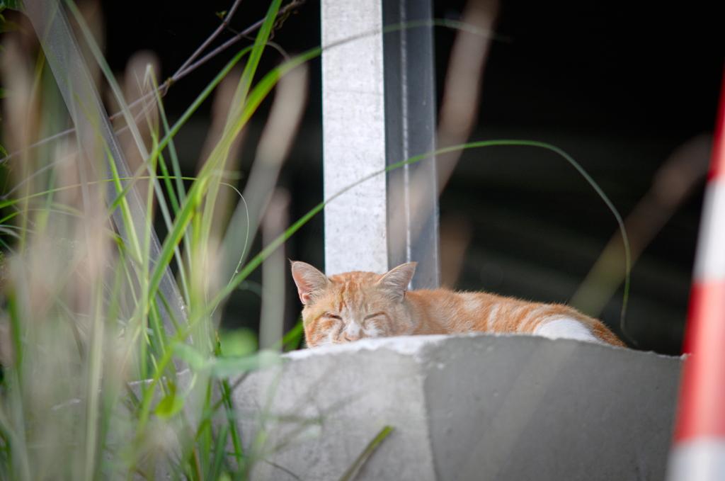 吾輩は猫である、ニャー # 850