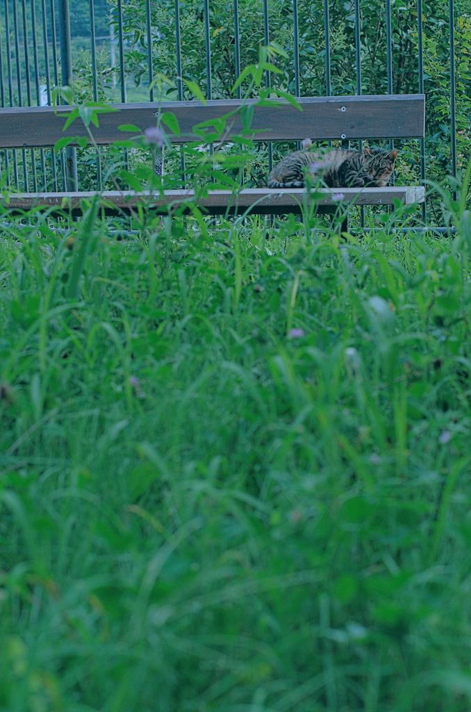 吾輩は猫である、ニャー # 1165