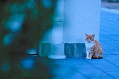 吾輩は猫である、ニャー # 653