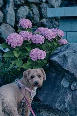 my pretty dog Ⅱ # 339