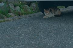 吾輩は猫である、ニャー # 1159