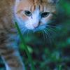 吾輩は猫である、ニャー # 672