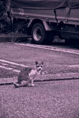 吾輩は猫である、ニャー # 1038