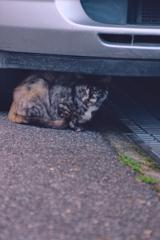 吾輩は猫である、ニャー # 1096