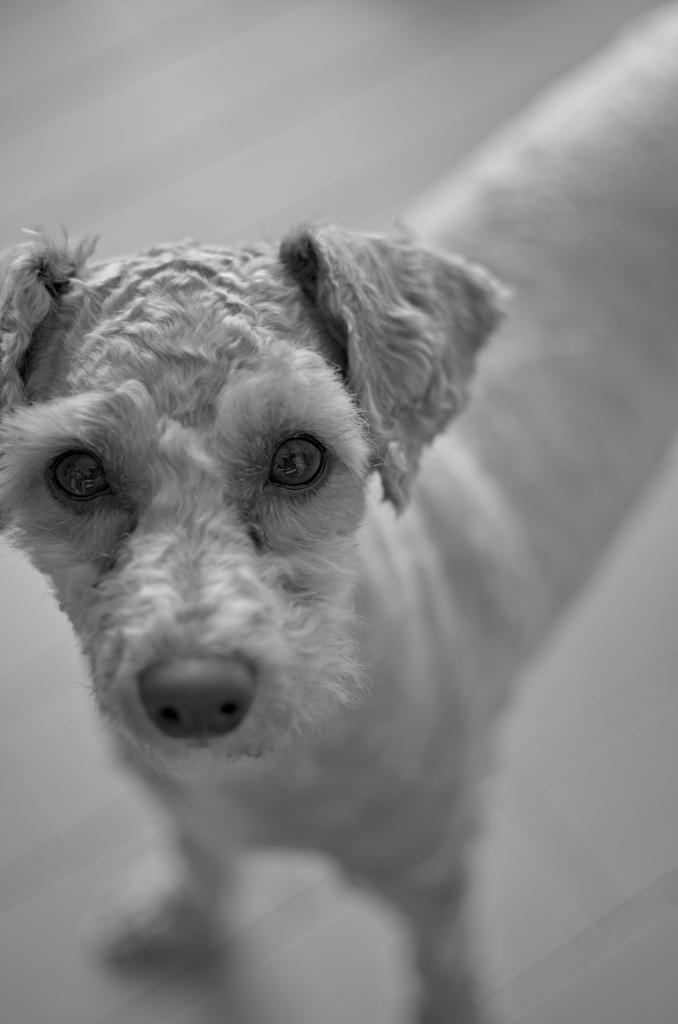 my pretty dog Ⅱ # 304