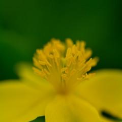 Shooting of flowers Ⅰ