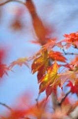 Autumn tint of garden
