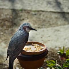 Visitor ~ not pretty wild bird ~
