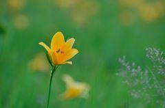 Begin to bloom