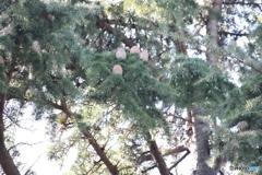 木のタマゴ③