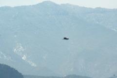 トビが飛んでる風景