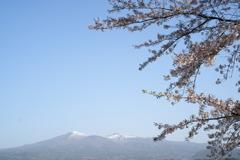 安達太良山 と 桜