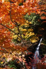 紅葉の火には、水でも消せぬ