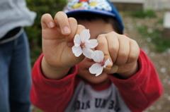 桜吹雪の中で遊ぶ