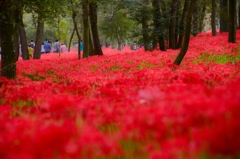 どこまでも赤い絨毯