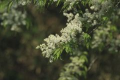どんぐりの花
