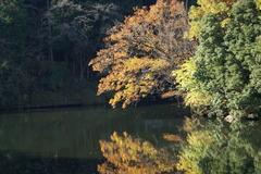鎌北湖 ~オレンジも綺麗です~