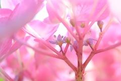 紫陽花の中は森のよう。