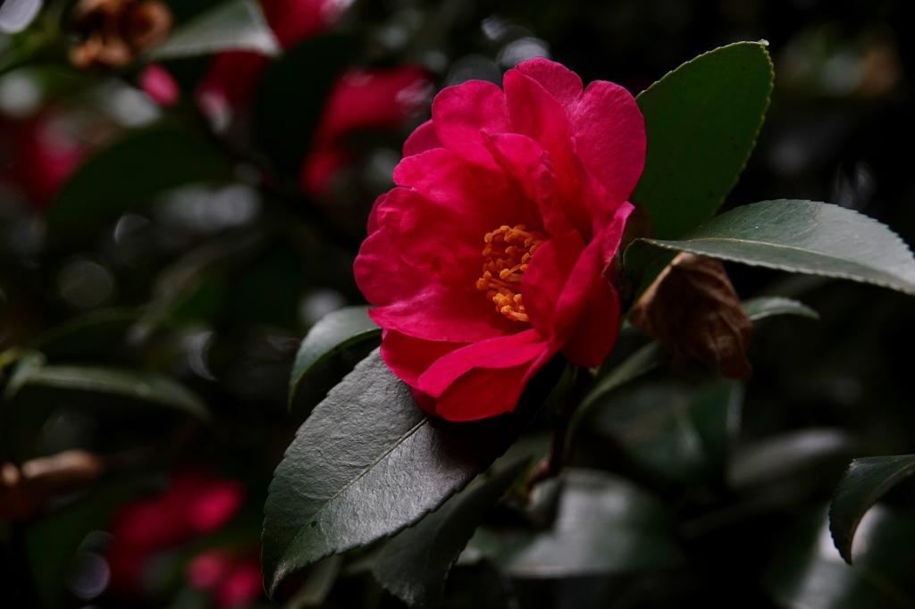 花びらは、繊細で。