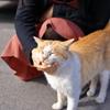 桜島の猫たち④