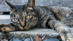 中津(大分県)で出会ったノラ猫君
