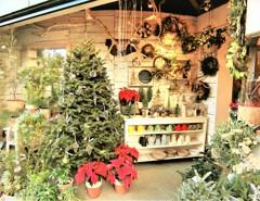 店頭のクリスマス色
