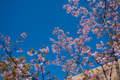 春うらら。〜2