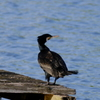 水元公園の鳥達〜5