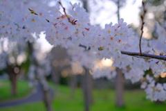 春が来た。16