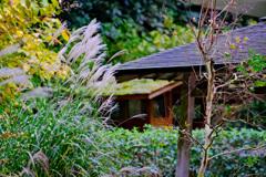 鎌倉より〜秋の風景-3
