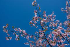 春うらら。〜1