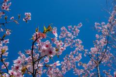 春うらら。〜3