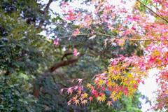 鎌倉より〜秋の風景-6