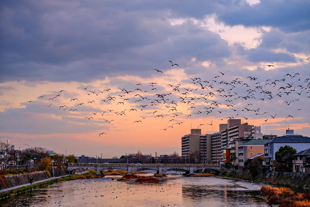 京都鴨川2